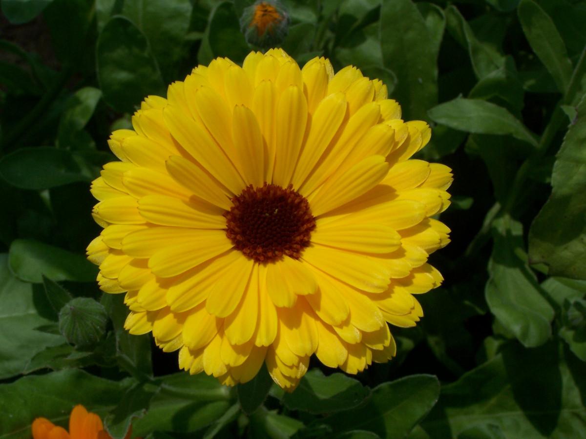 Free Images : meadow, flower, petal, flora, wildflower ...