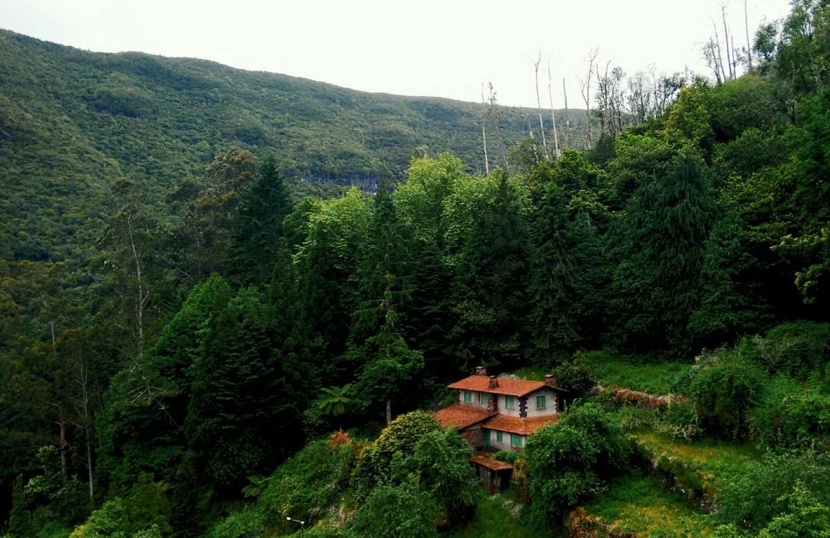 Images gratuites paysage arbre la nature r gion for Cabine colorado aspen