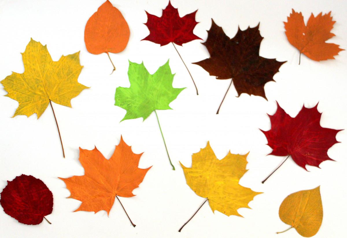 Открытки листья деревьев, картинки днем рождения