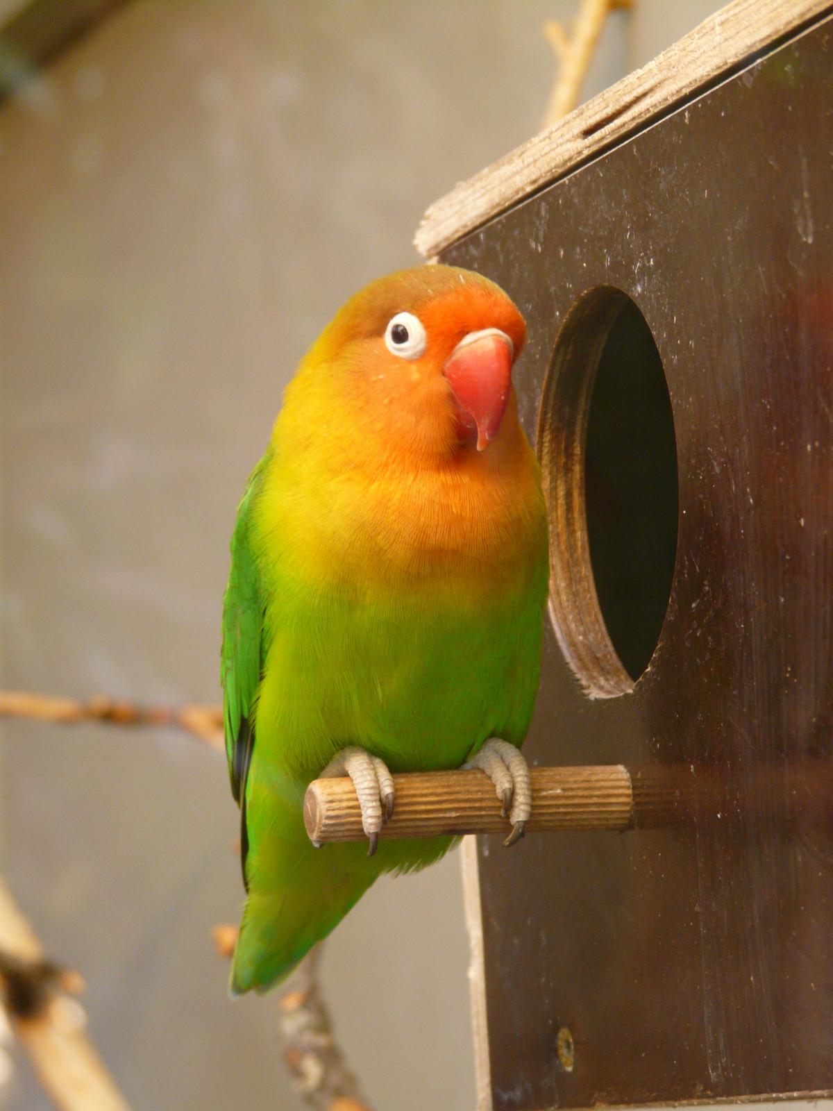 images gratuites oiseau animal faune vert le bec couleur argent color jaune plumage. Black Bedroom Furniture Sets. Home Design Ideas