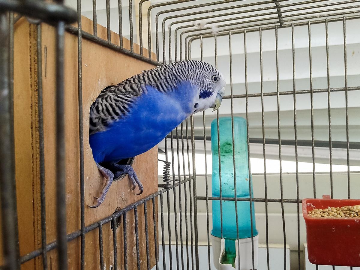 торпедо фотки попугаев в клетке искал ним