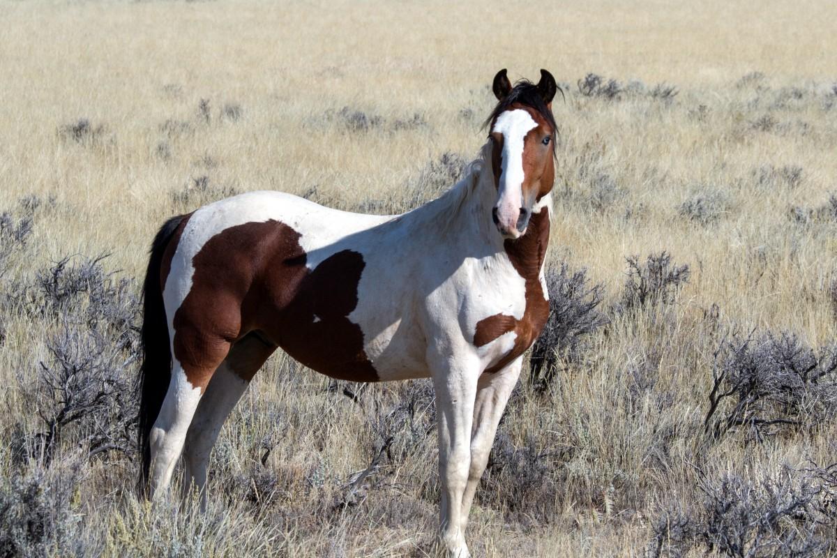 https://c.pxhere.com/photos/e9/51/wild_horses_wild_mustangs_mustangs_horses_american_wild_horses-395083.jpg!d
