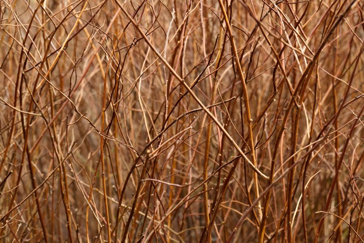 Fotos gratis rbol c sped rama planta madera - Suelo de bambu ...