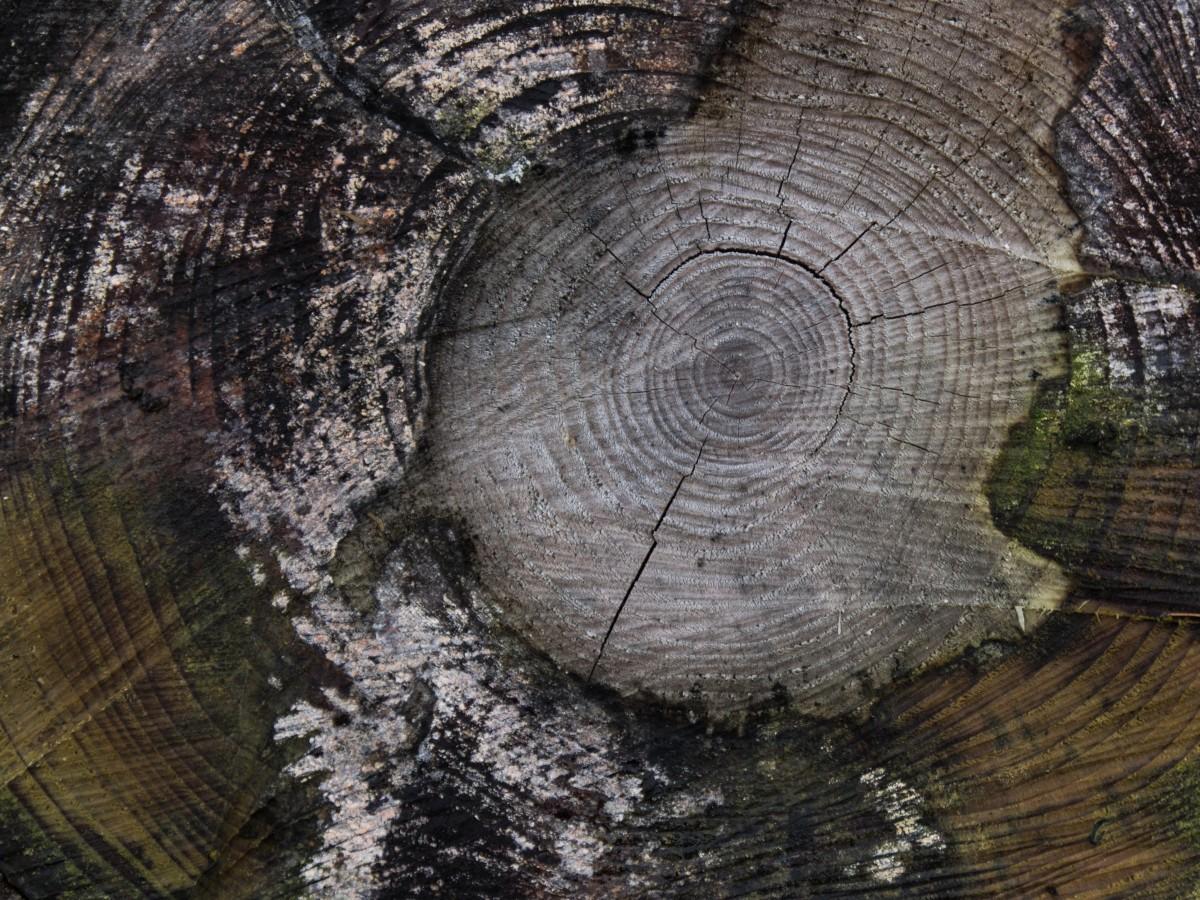 Gratis afbeeldingen boom natuur abstract zwart en wit hout structuur spiraal verdieping - Badkamer natuur hout ...