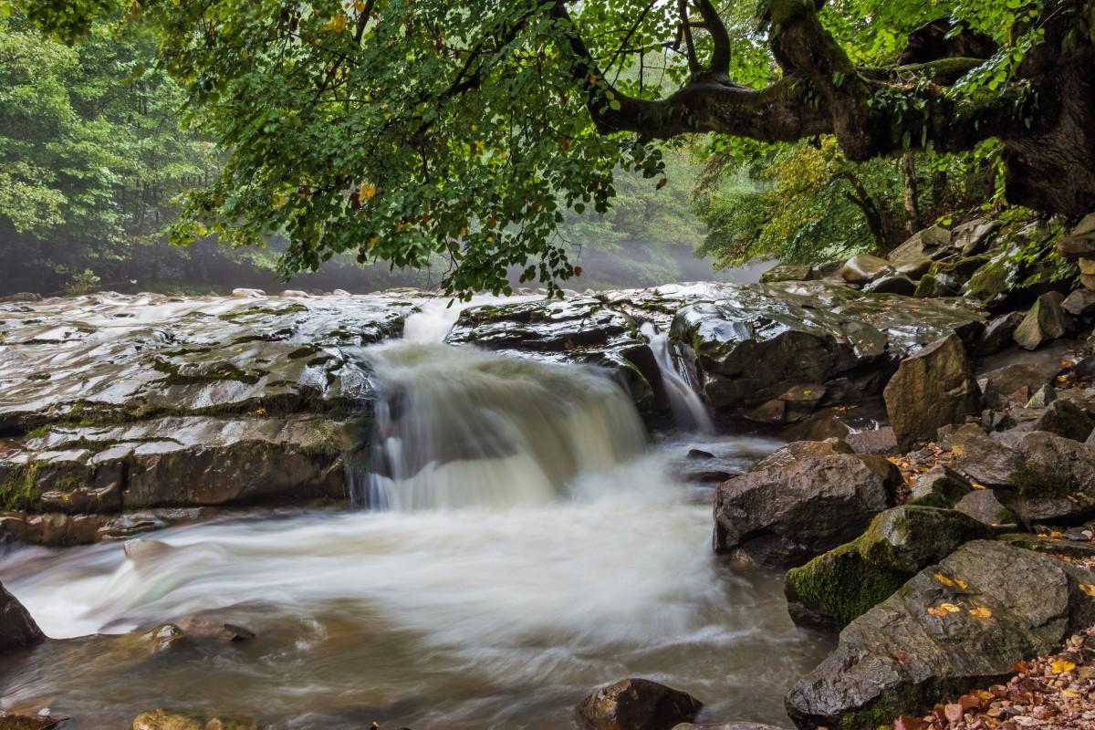 images gratuites arbre eau la nature roche cascade courant vert jungle l 39 automne. Black Bedroom Furniture Sets. Home Design Ideas