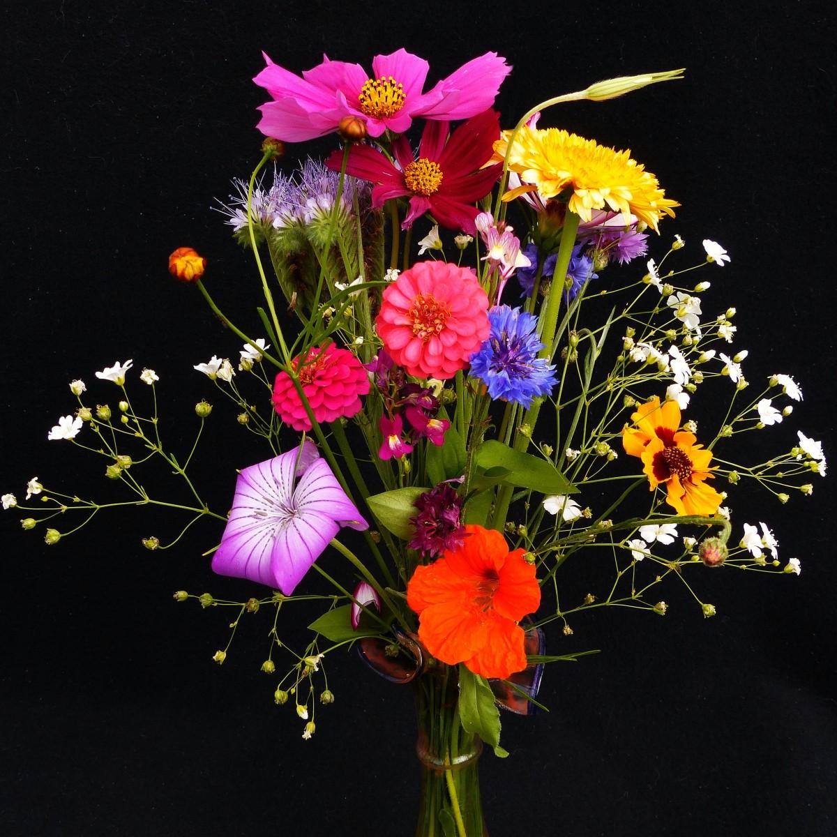 Images gratuites fleur flore lavande fleur sauvage for Bouquet de fleurs savon