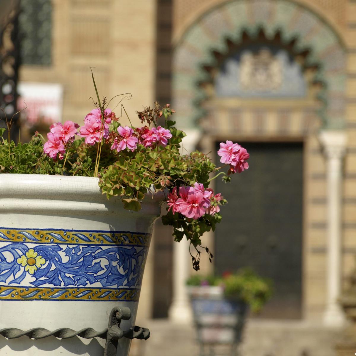 Immagini belle pianta fiore primavera autunno flora for Finestra balcone