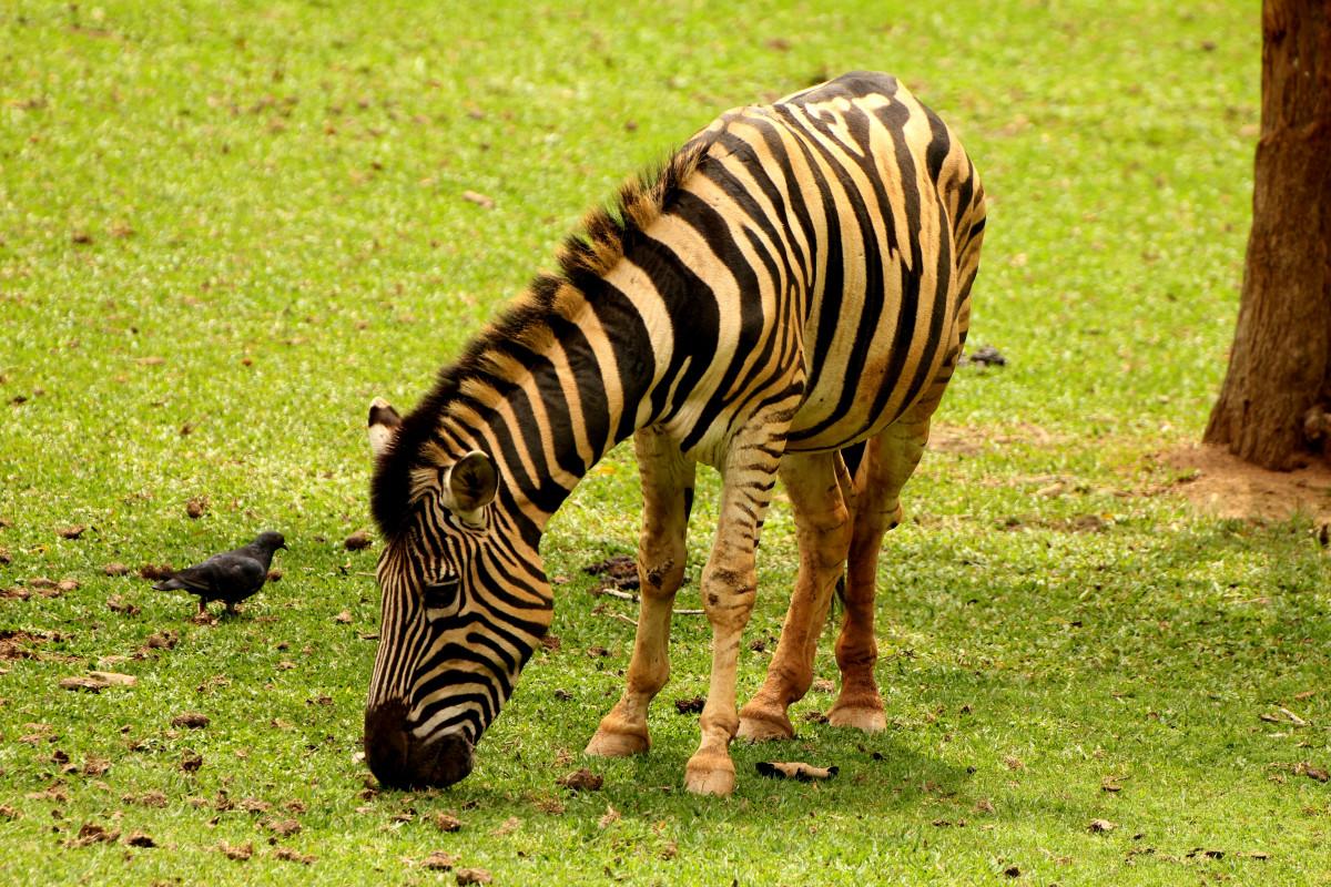 images gratuites animal profil faune sauvage zoo. Black Bedroom Furniture Sets. Home Design Ideas