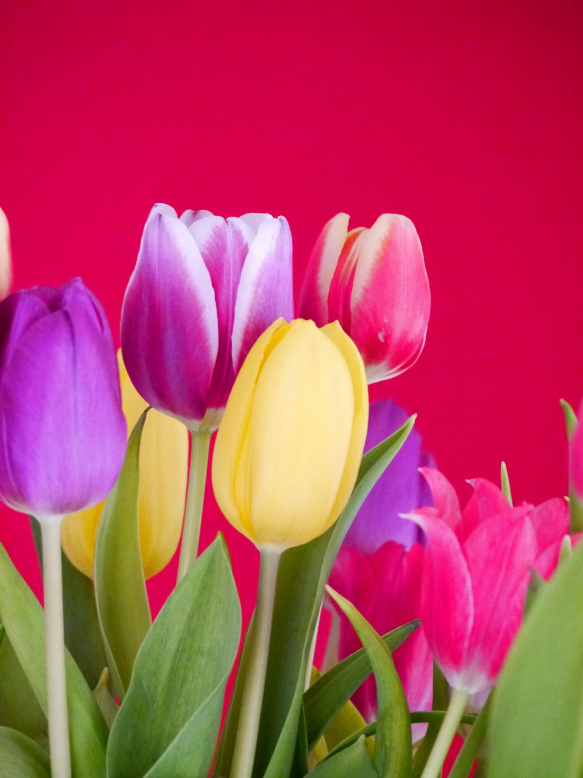 Открытки красивые цветы тюльпаны, открытки доброе утро