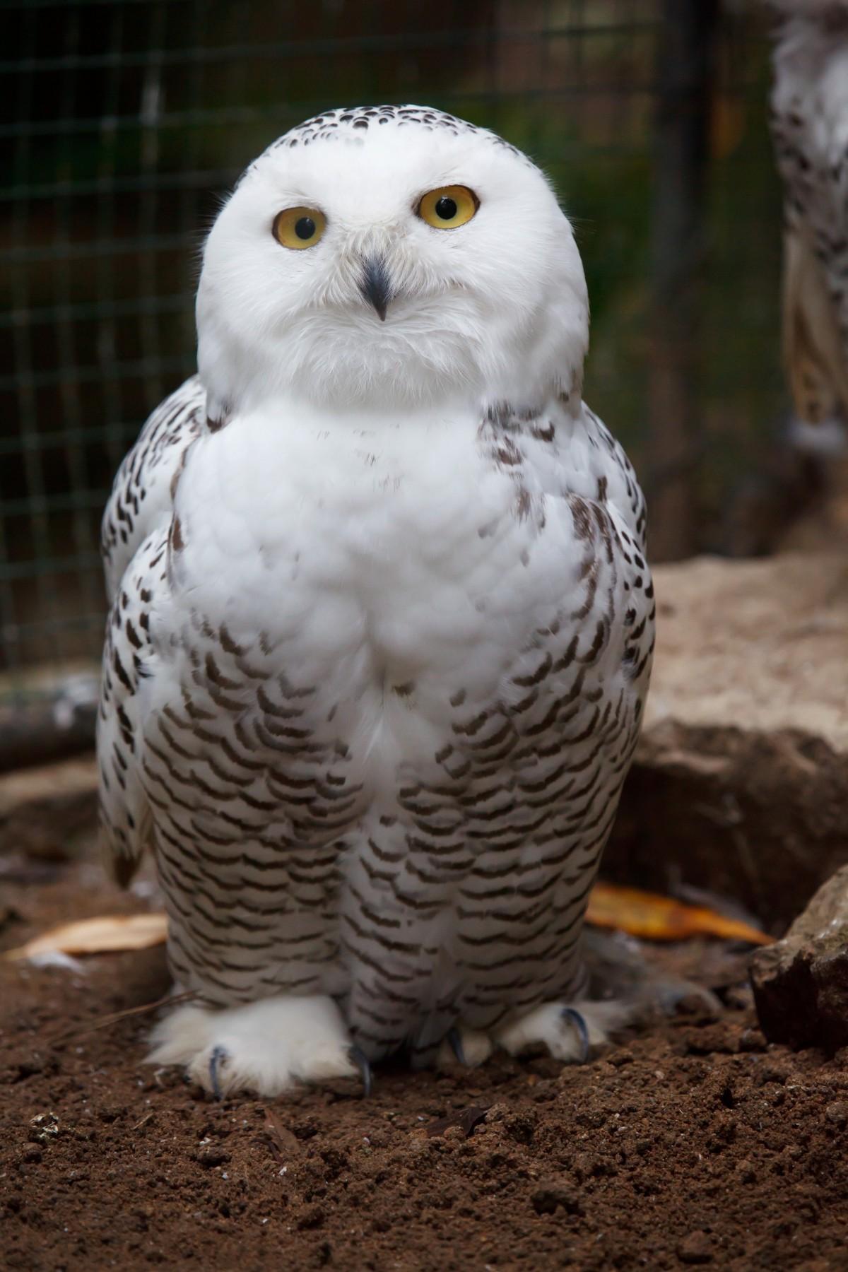 Images gratuites la nature neige blanc animal faune - Photos de neige gratuites ...