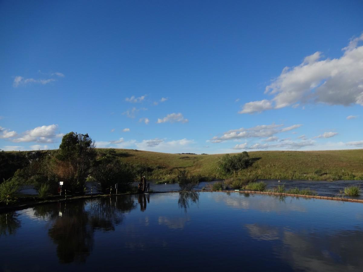 Fotos gratis rbol flor lago r o estanque reflexi n for Estanque reflectante