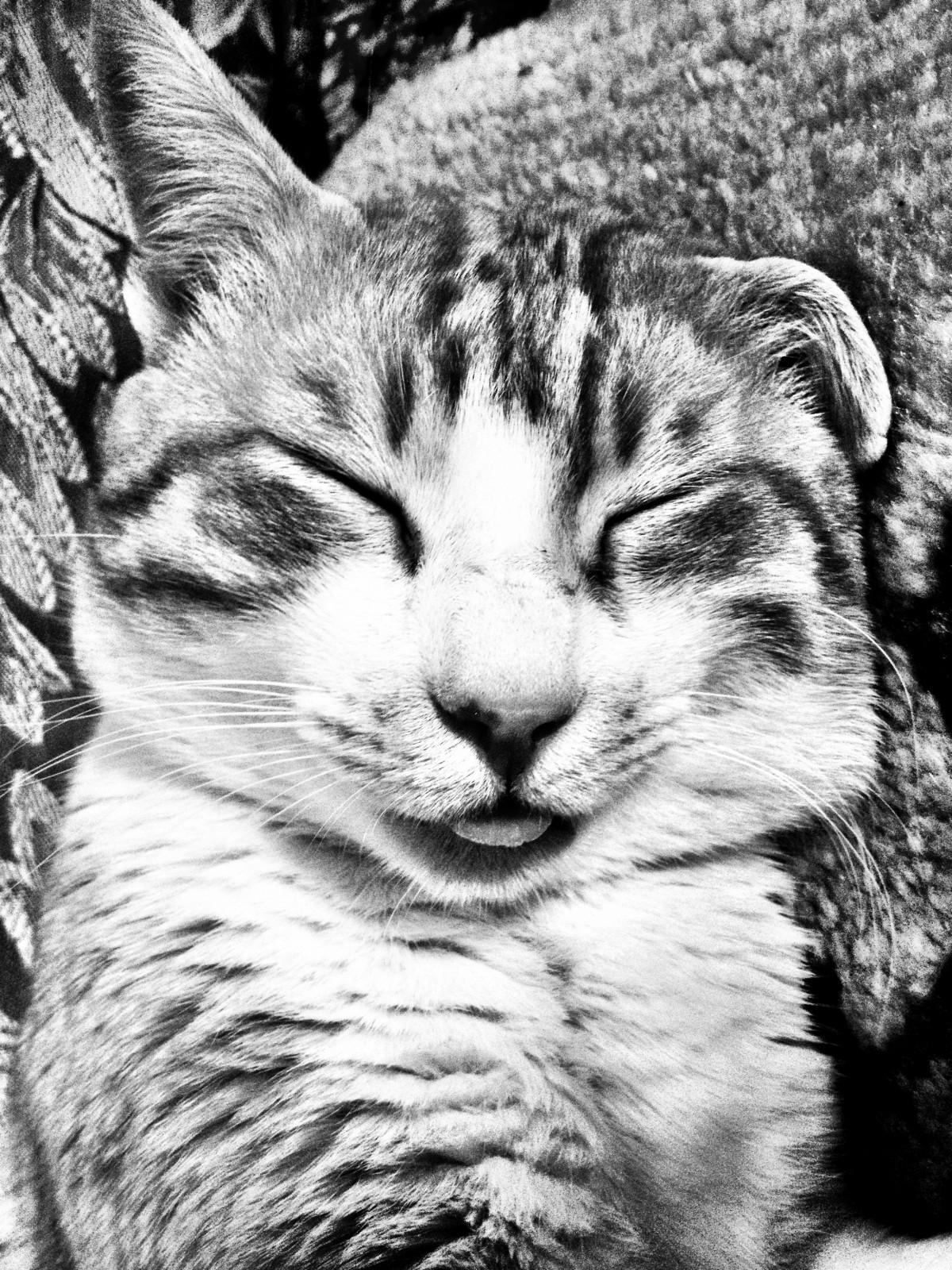 Gambar Kucing Ilustrasi godean.web.id