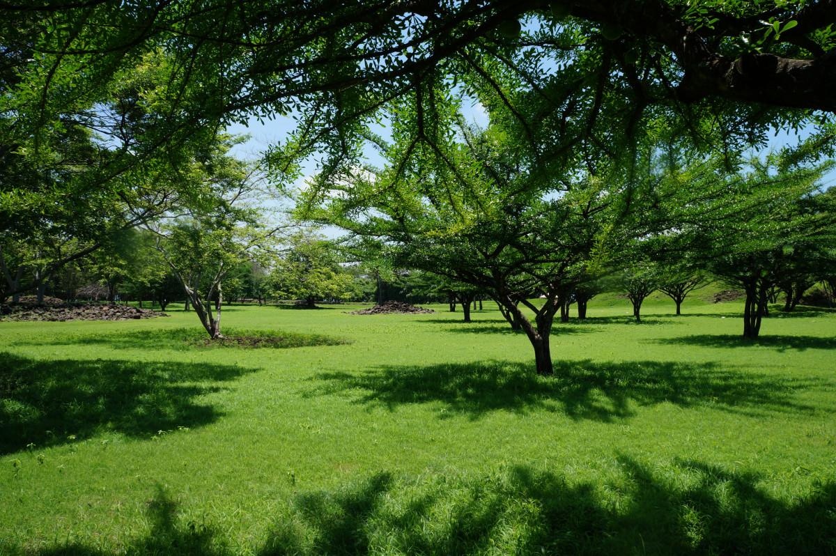 Fotos gratis paisaje rbol naturaleza bosque c sped for Iluminar arboles jardin
