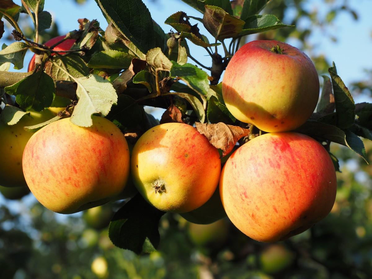 Omena Vitamiinit