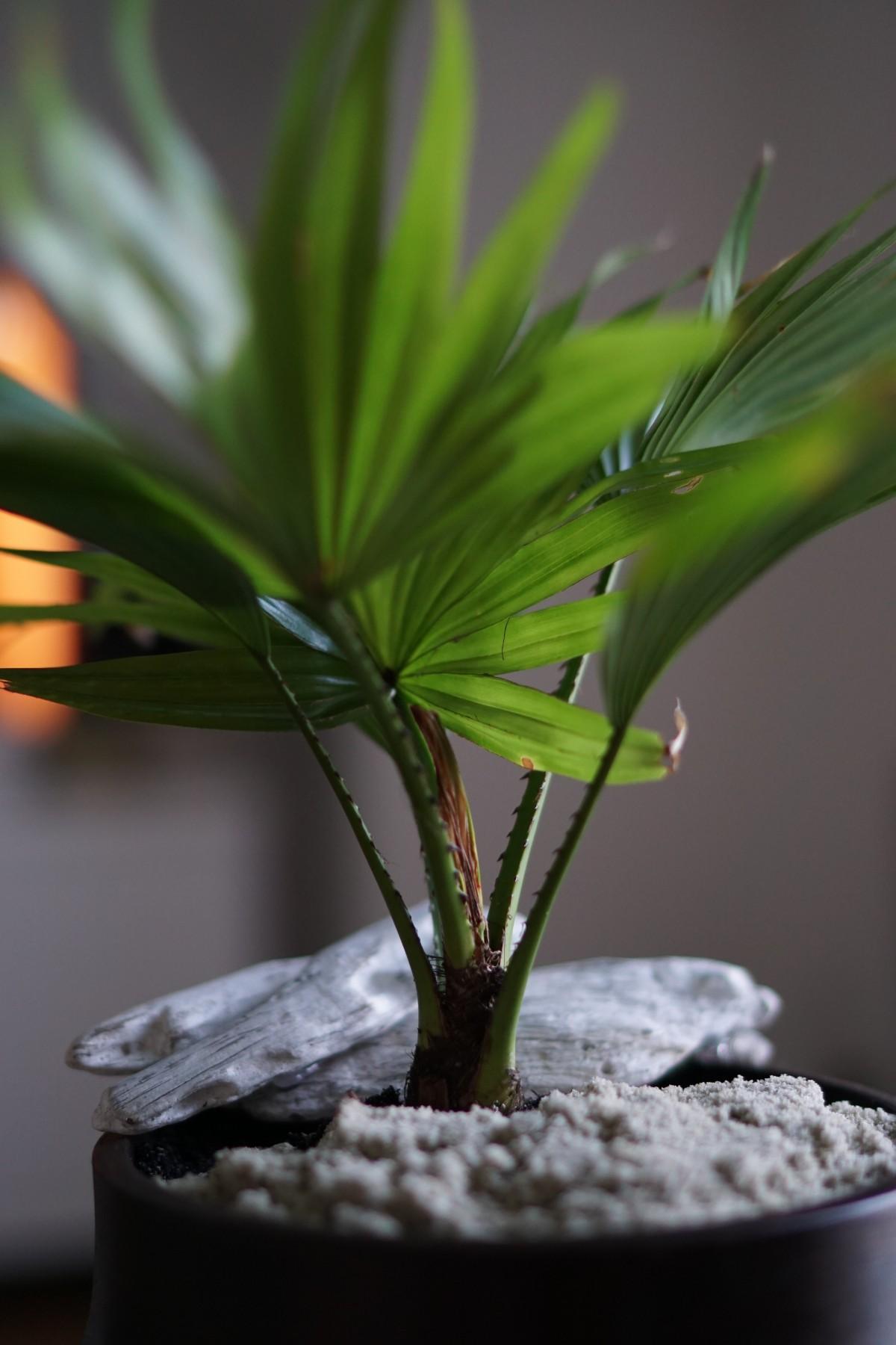 images gratuites les plantes vert fond blanc. Black Bedroom Furniture Sets. Home Design Ideas