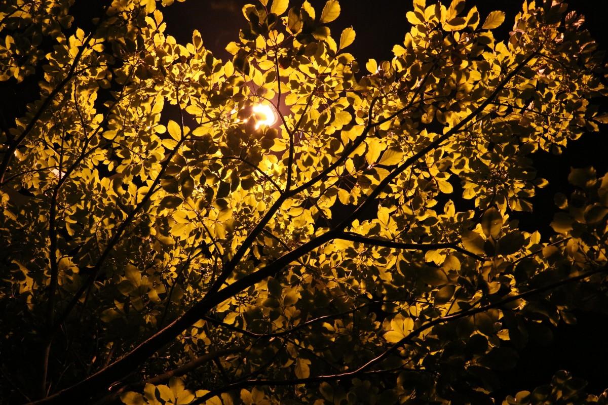 Resultado de imagem para imagens de outono noturna
