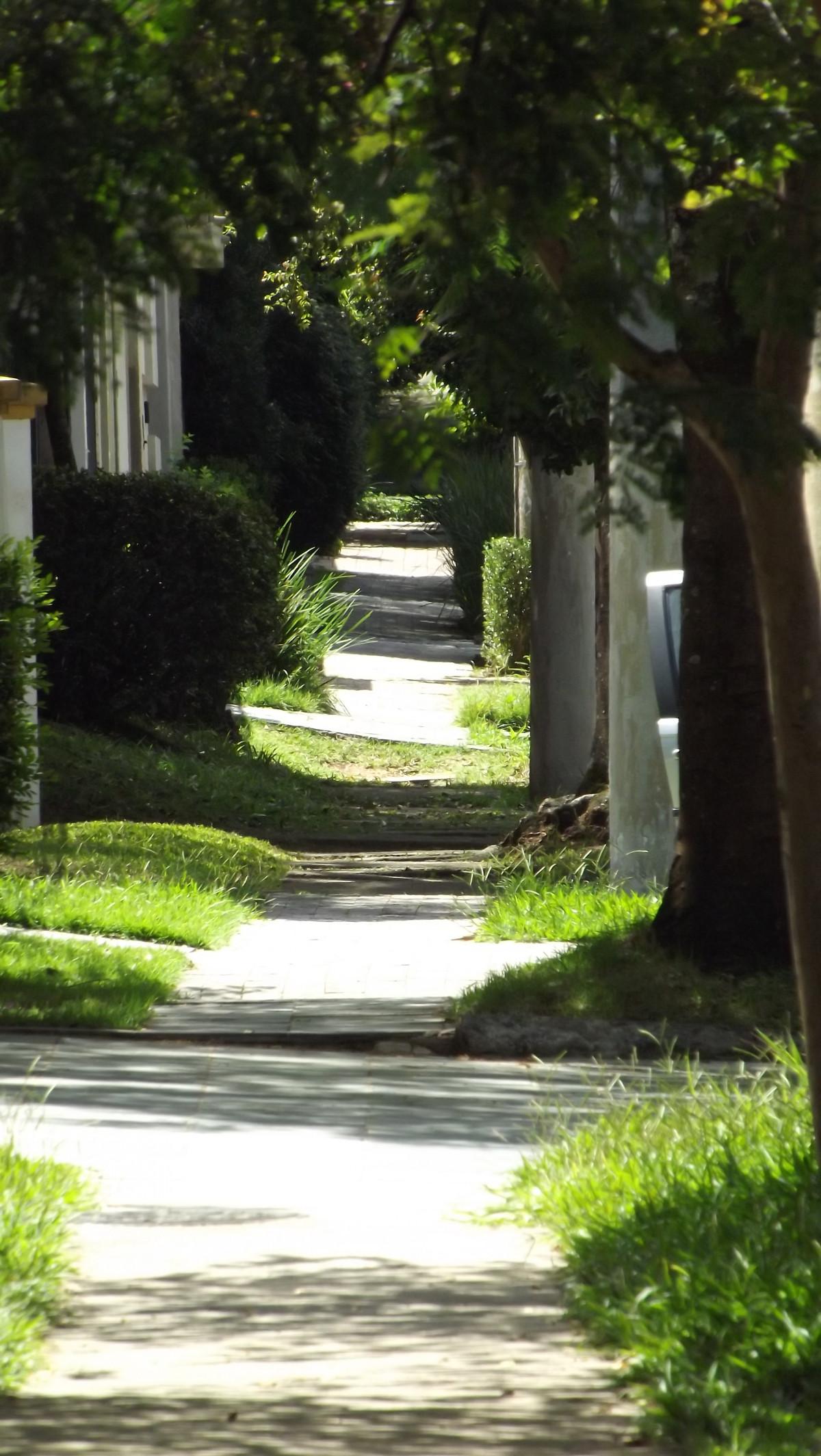 Images gratuites arbre la nature herbe plante banc pelouse feuille trottoir passerelle - Quand planter de la pelouse ...