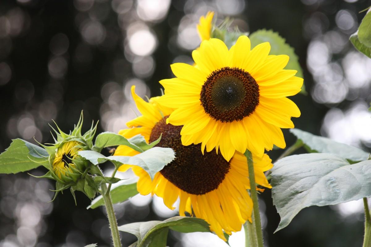 Hình ảnh Thiên Nhiên Thực Vật Cánh Hoa Mùa Hè Màu Xanh