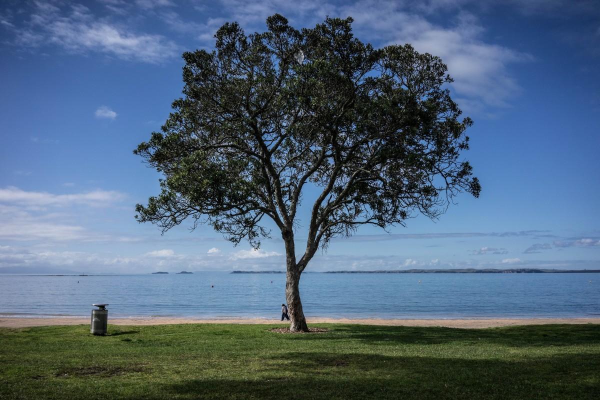 Free Images Beach Landscape Sea Coast Tree Nature