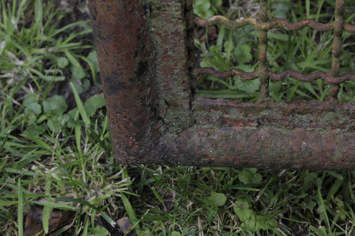 Immagini belle albero foresta erba ramo recinto for Pianta esterna