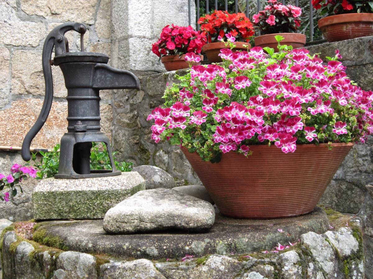 Images gratuites eau plante pelouse arri re cour jardin les plantes fleurs am nagement - Quand planter de la pelouse ...