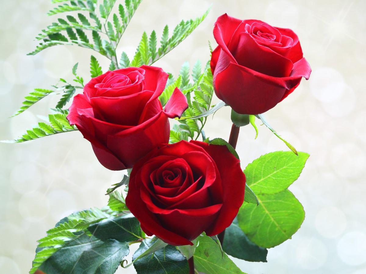 Открытка три розы, коты татьяны