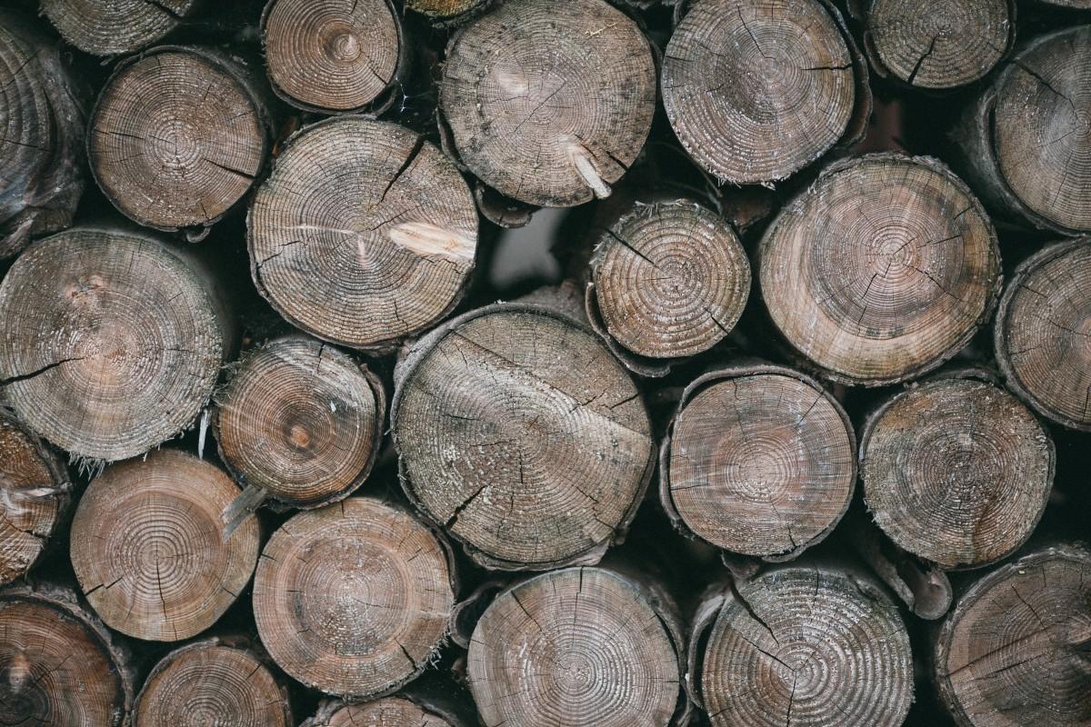 Images gratuites arbre tronc b che argent bois de chauffage pile de bois devise pi ce - Arbre fruitier comme bois de chauffage ...