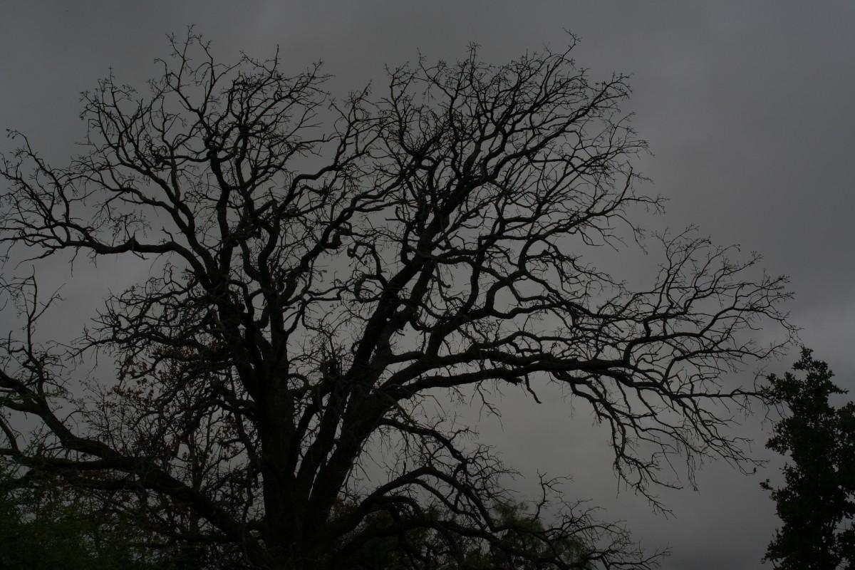 Black Halloween Tree