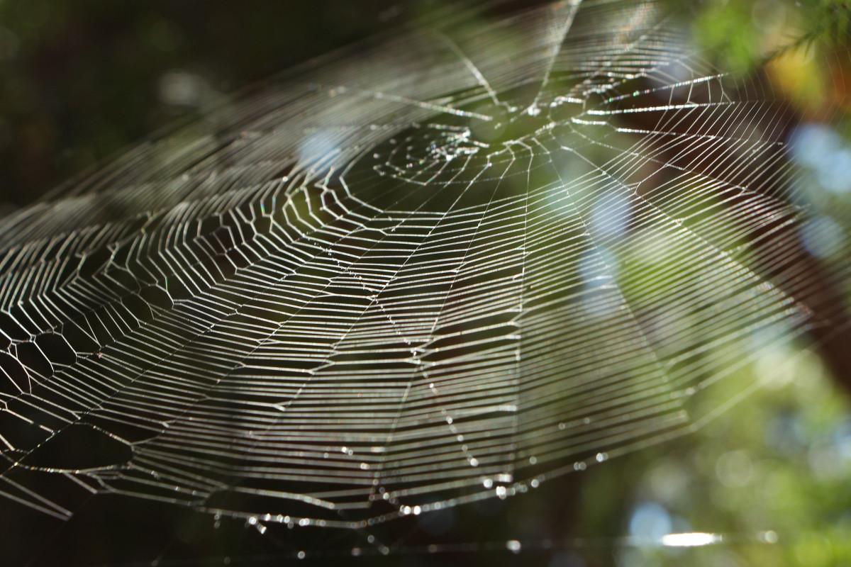free images nature dew spiderweb monochrome fauna