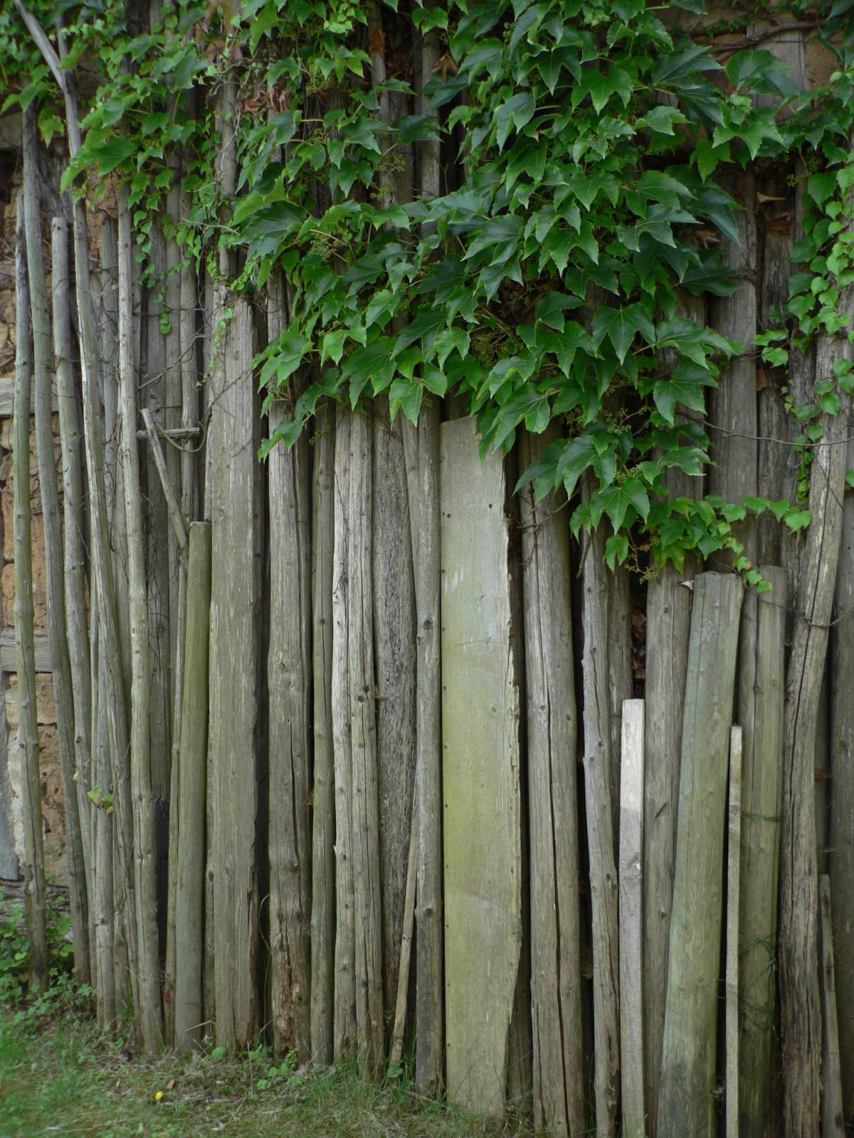 Images gratuites arbre fleur jeune vert cro tre for Solde plante jardin