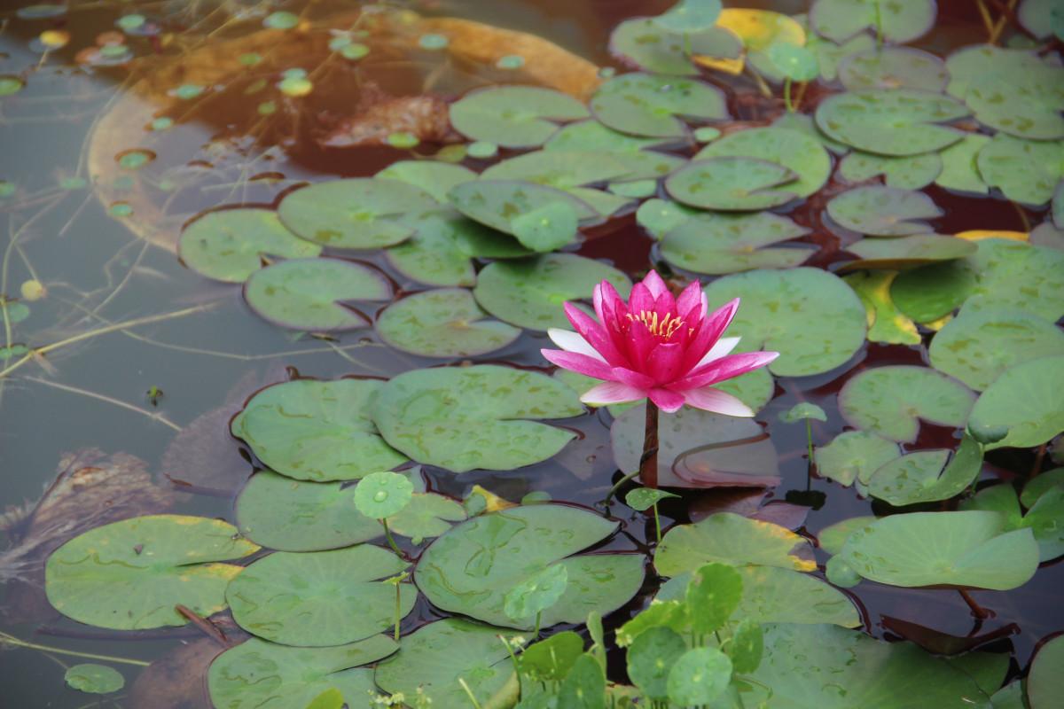 fotos gratis hoja flor p talo estanque fauna