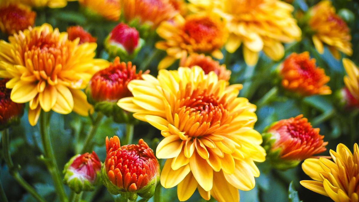 Красивые картинки осенние цветы