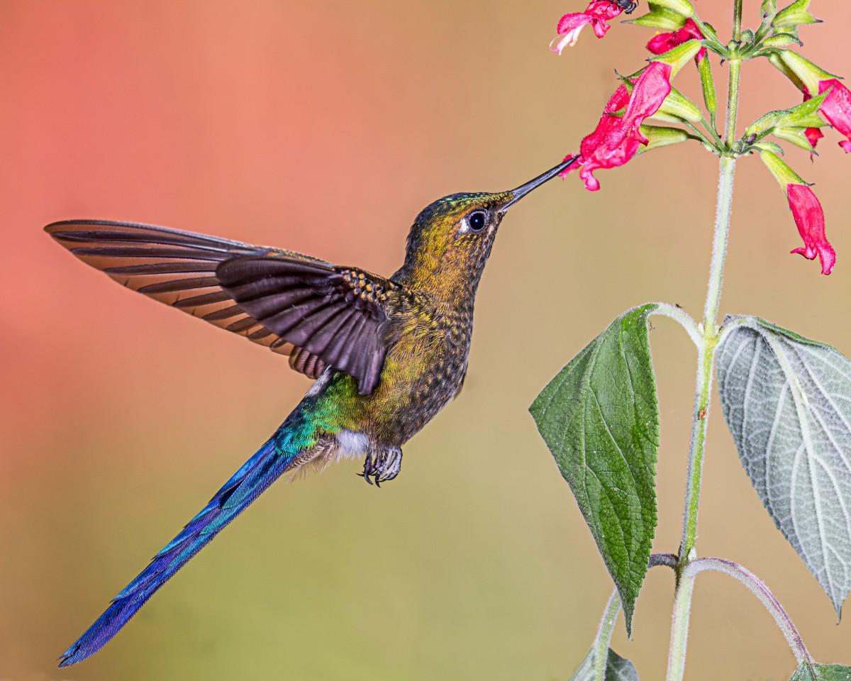 птица природа ветка колибри  № 1994299 загрузить
