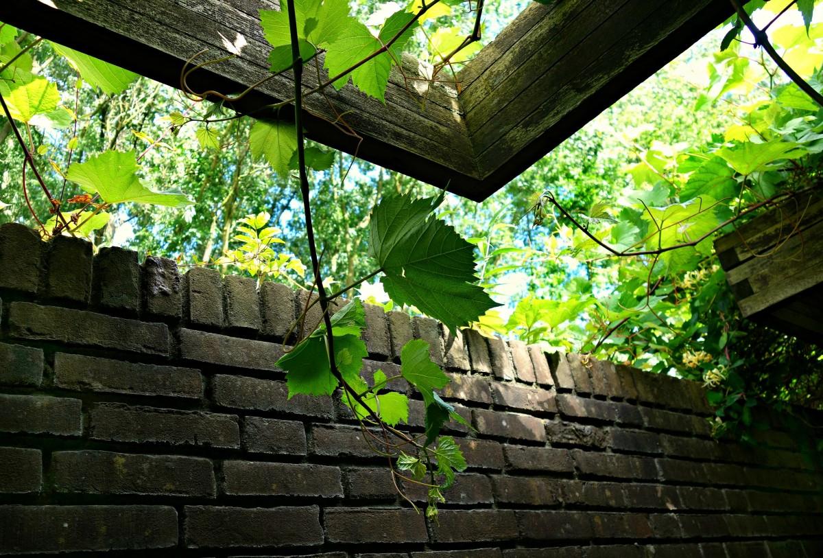 무료 이미지 : 나무, 덩굴, 집, 햇빛, 잎, 꽃, 벽, 여름, 장식, 녹색 ...