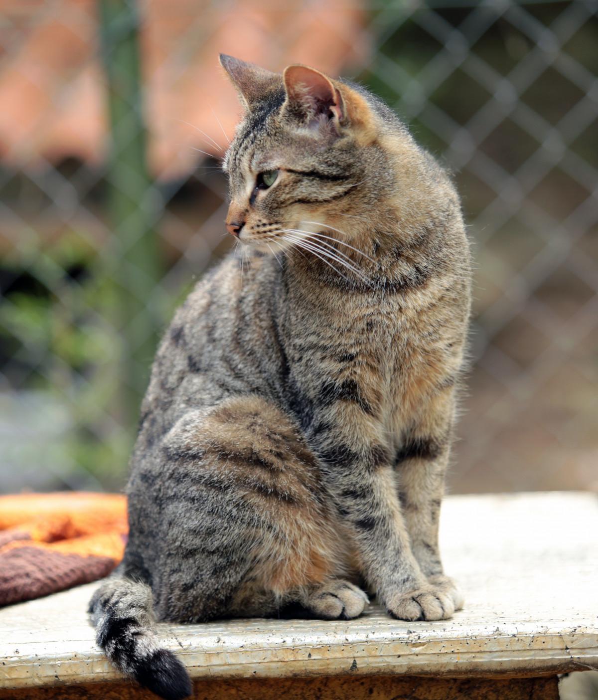 Gambar Kucing Betina godean.web.id