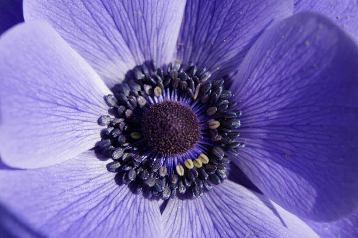 kostenlose foto himmel blume lila bl 252 tenblatt dunkelheit blau flora nahansicht violett