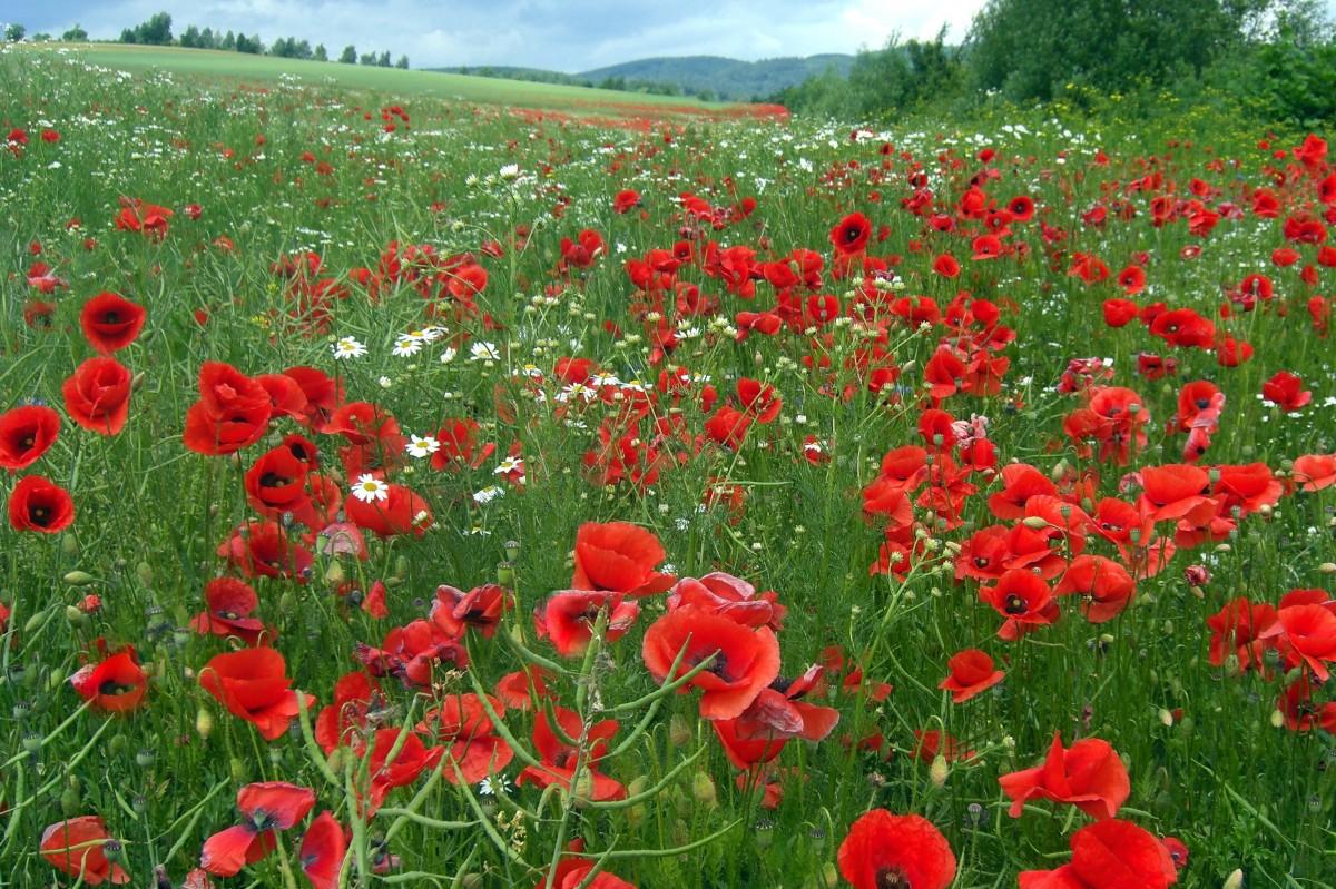 Поля диких цветов фото