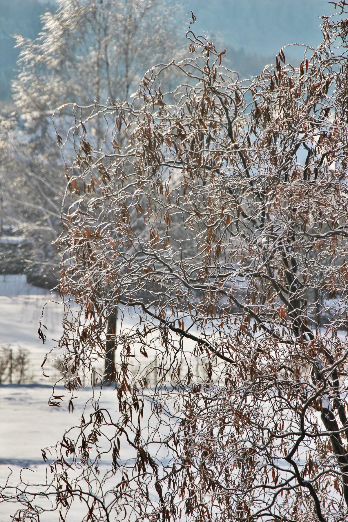 Landschaft Baum Natur Wald Ast blühen