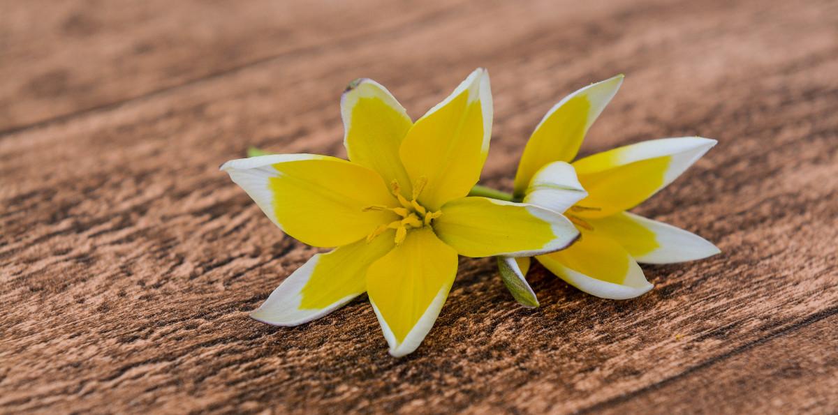 Free Images : Wood, Wheel, Leaf, Flower, Petal, Flora