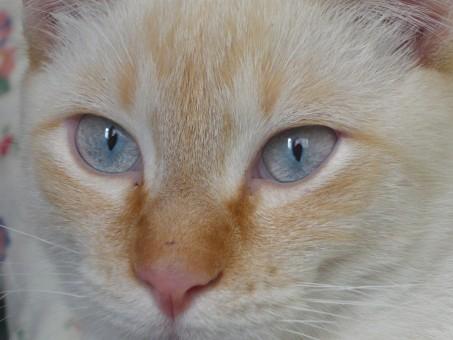 Kissan Silmä