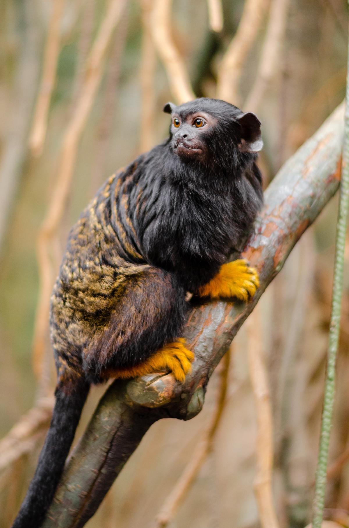 Free Images : branch, wildlife, zoo, beak, mammal, fauna ...