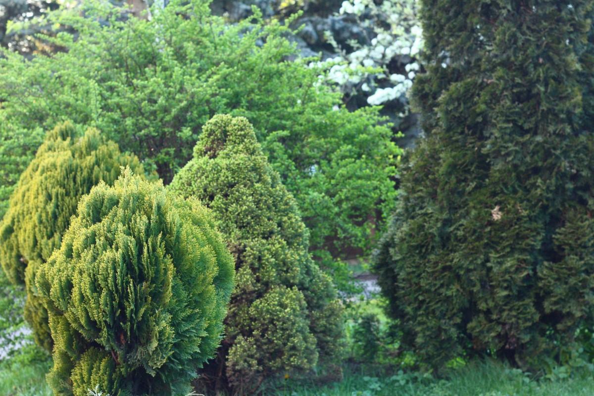 Images gratuites arbre branche plante feuilles for Arbres a feuilles persistantes
