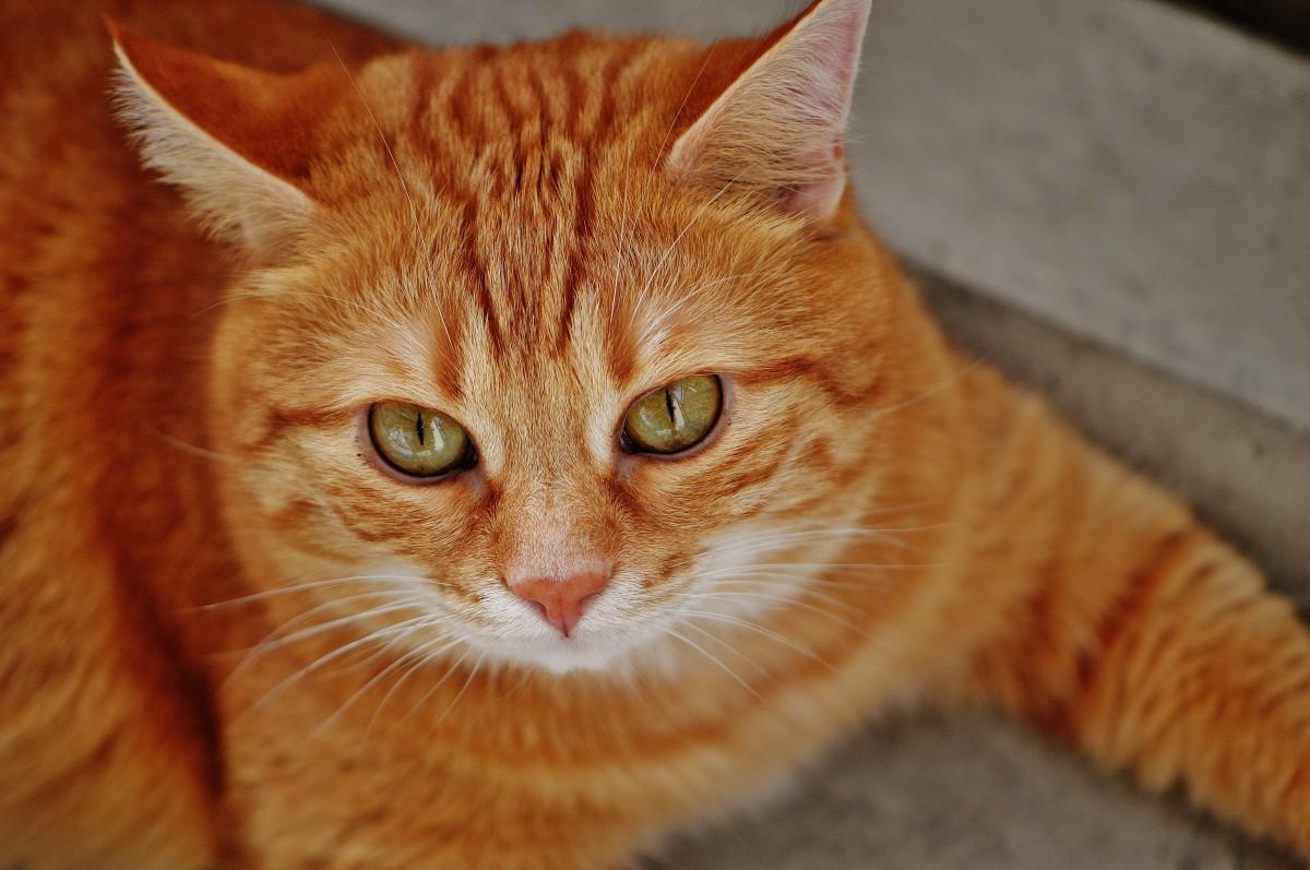 Free Images : animal, cute, pet, kitten, feline, fauna ...