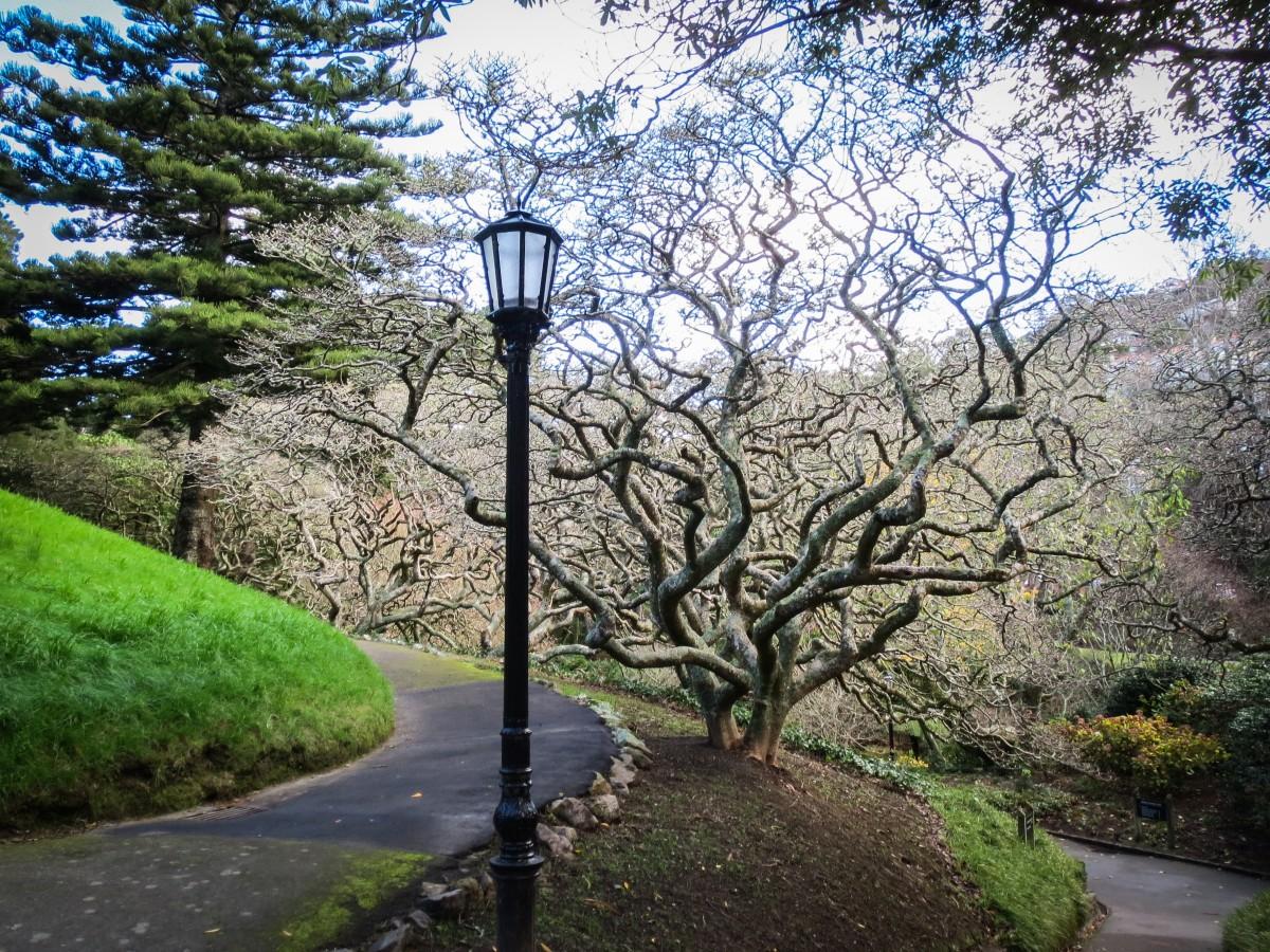 виды дерево фонарь картинки пройти