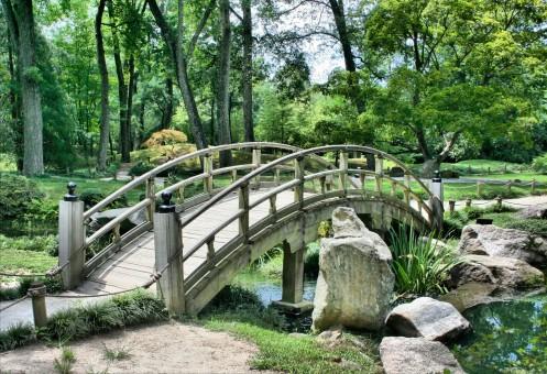 fleur,arbre,forêt,chemin,architecture,pont