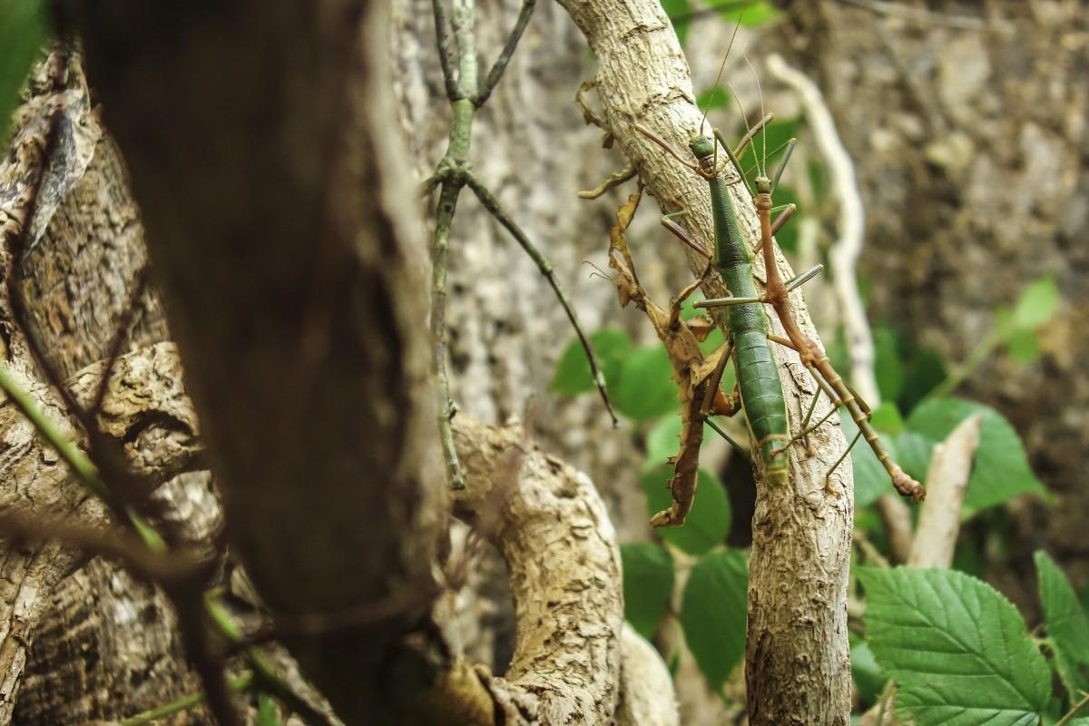 Images gratuites la nature branche feuille faune zoo for Plante jungle