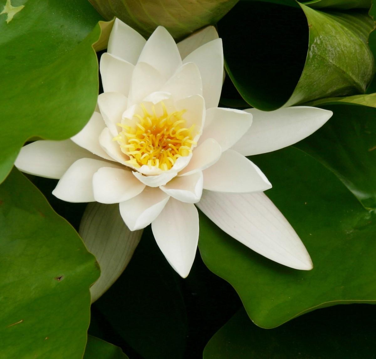 gambar alam menanam halaman rumput bangunan kolam