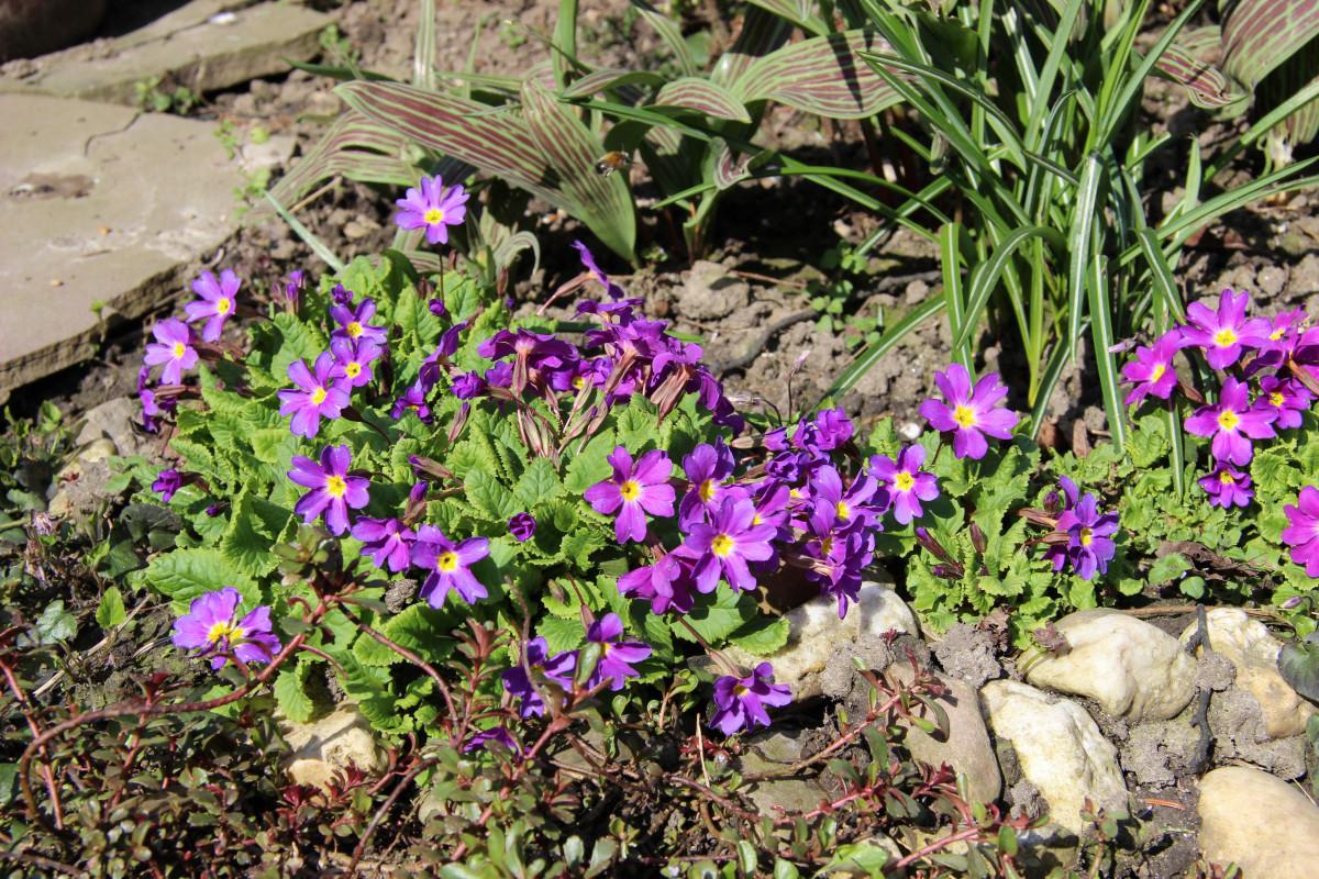 Free Images Flower Purple Botany Garden Flora Wildflower
