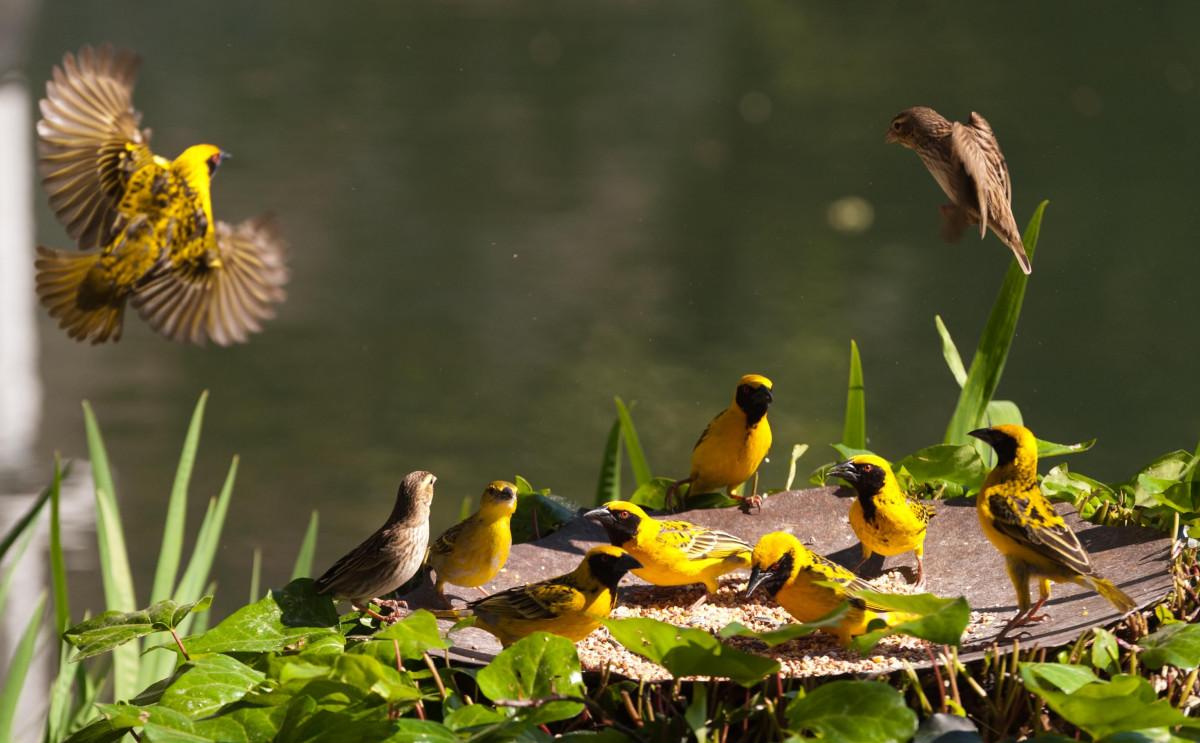 Природа картинки птички