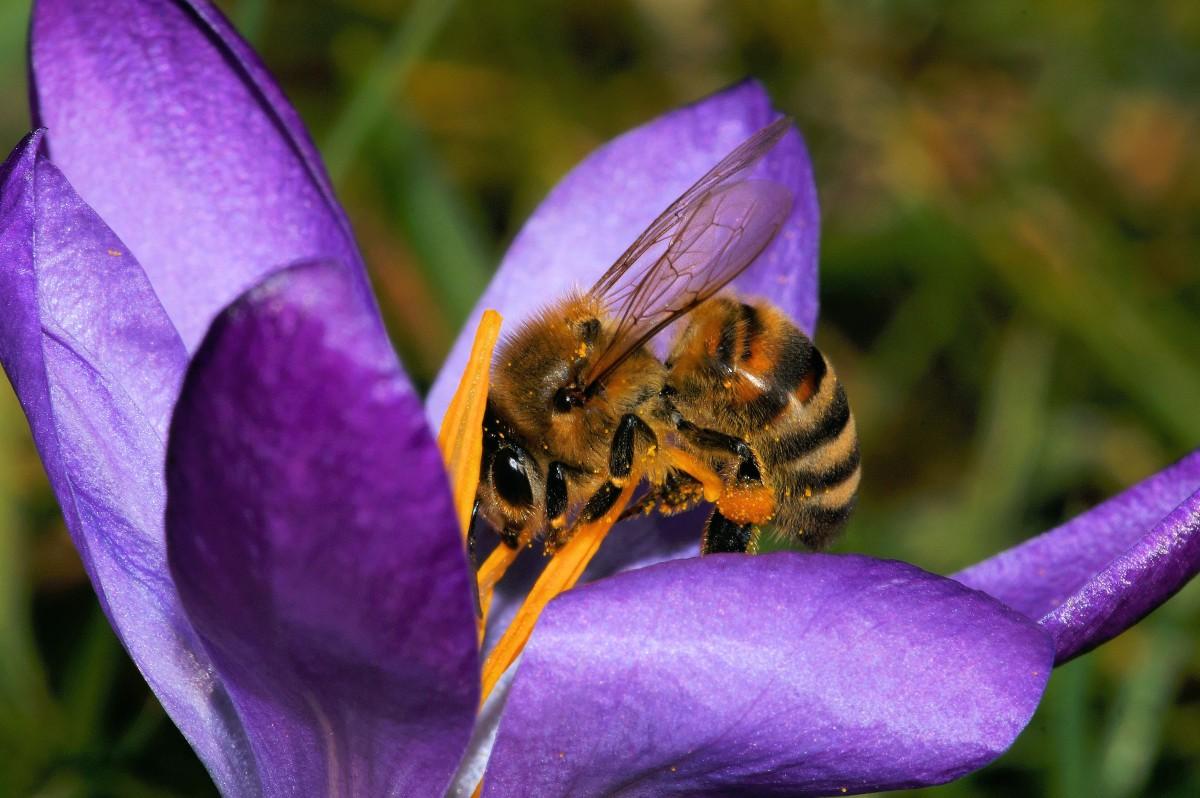 kostenlose foto natur bl hen pflanze fotografie blume lila bl tenblatt pollen flora. Black Bedroom Furniture Sets. Home Design Ideas